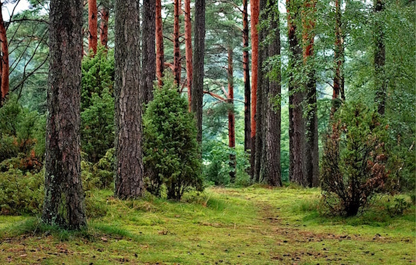 A Healthy Second Growth Forest